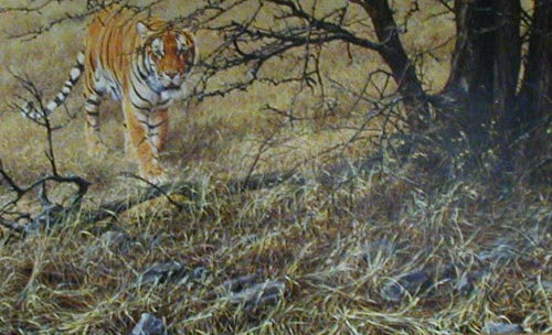 Tiger - Painting by Alan Hunt