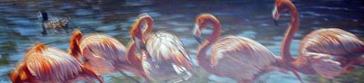 Flamingo - Painting by Alan Hunt