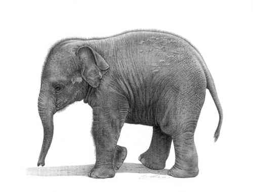 Little Tusker - Painting by David Dancey-Wood