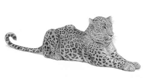 Persian Leopard - Painting by David Dancey-Wood