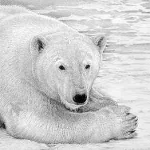 Polar Prince - Painting by David Dancey-Wood