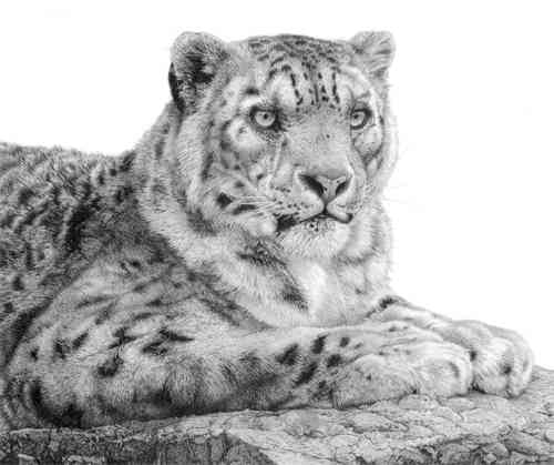Snow Leopard - Painting by David Dancey-Wood